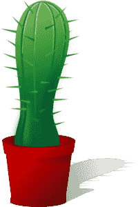 Кактус можно подарить и он полезен для здоровья прогрммиста
