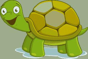 Счастливая черепаха