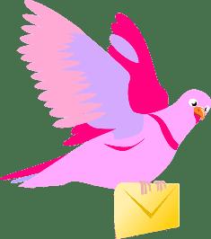Голубь с письмом мужчине о жизни